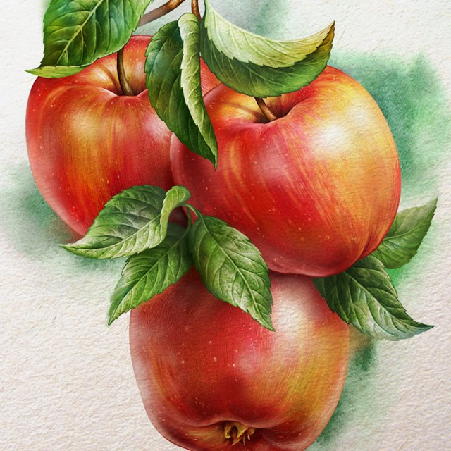Apples. Watercolor illustration.