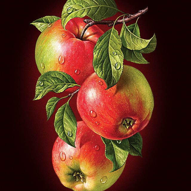 Apples. Illustration for packaging juice Rottaler.