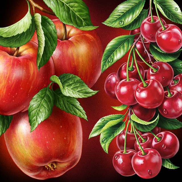 A branch of apples, a branch of cherry. Illustrations for packaging.