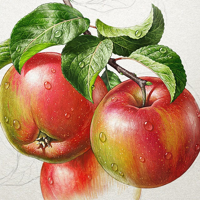 Apples. Watercolor.