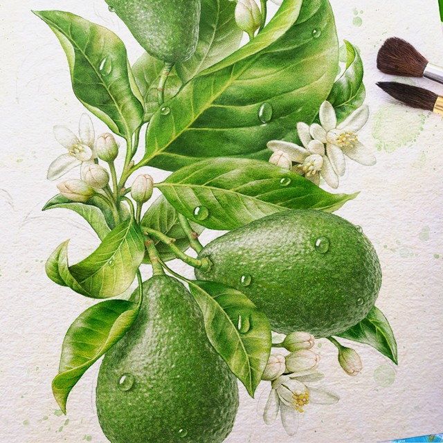 Avocado. Watercolor illustration.