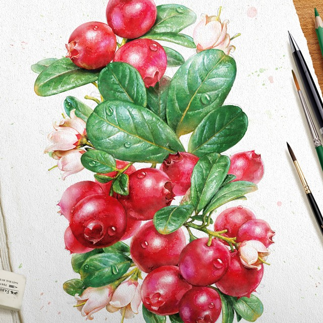 Cowberry. Watercolor.