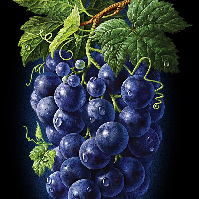 A branch of blue grapes.