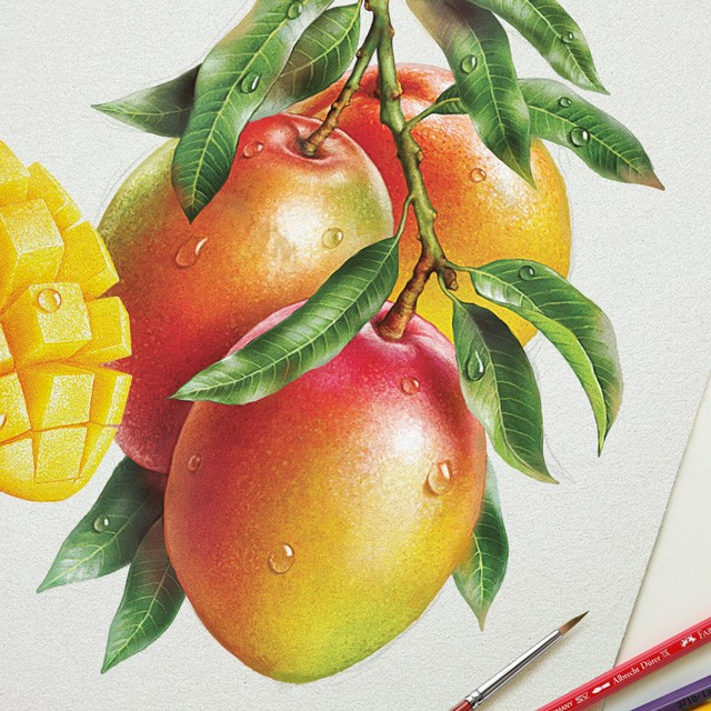 Mango. Watercolor illustration.