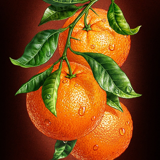 Oranges. Illustration for packing juice.