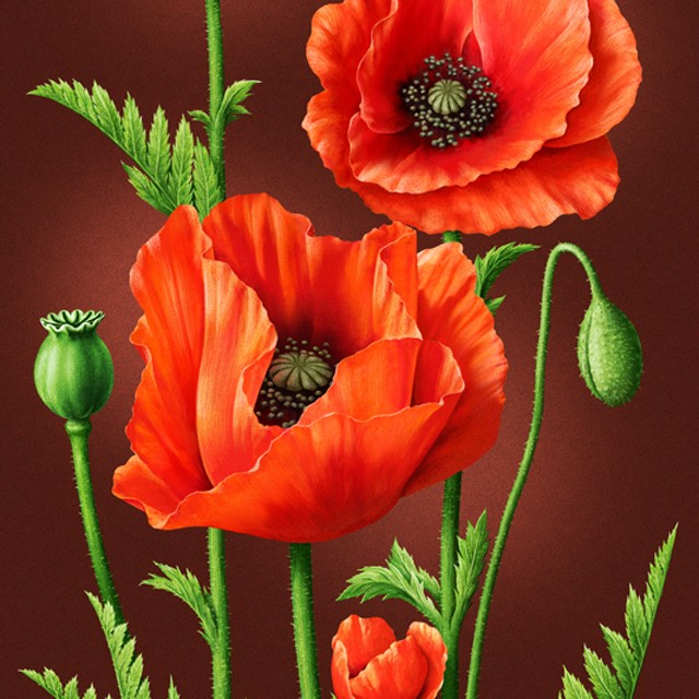 Poppies. Illustration for packaging.