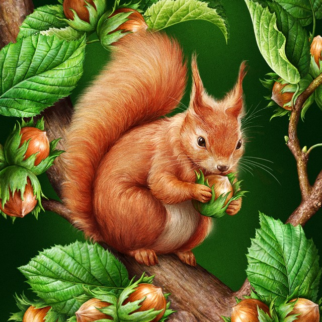 Squirrel. Illustration for ice cream.